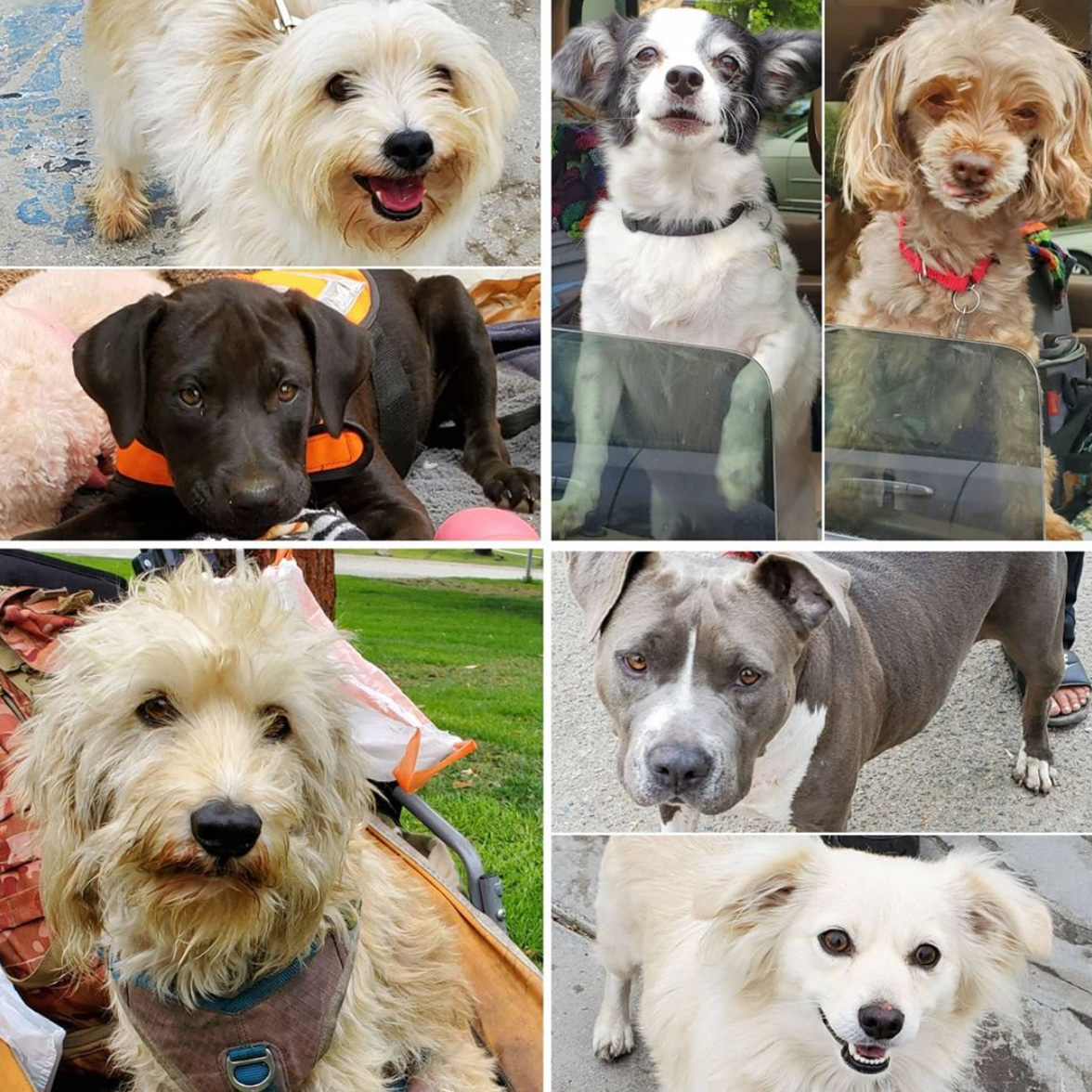 Friday's Furry Friends 10-23-2020