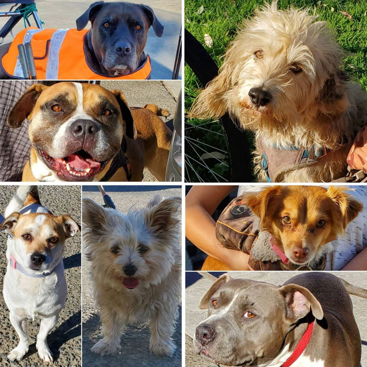 Friday's Furry Friends 10-30-2020