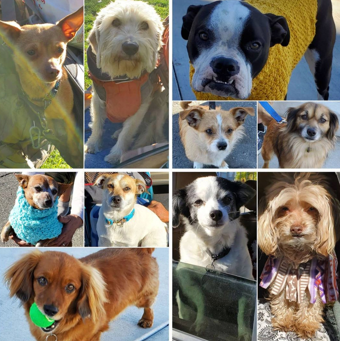 Friday's Furry Friends 2-5-2021