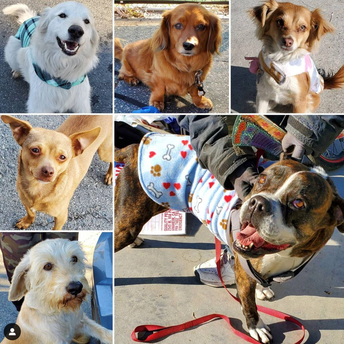 Friday's Furry Friends 2-19-2021