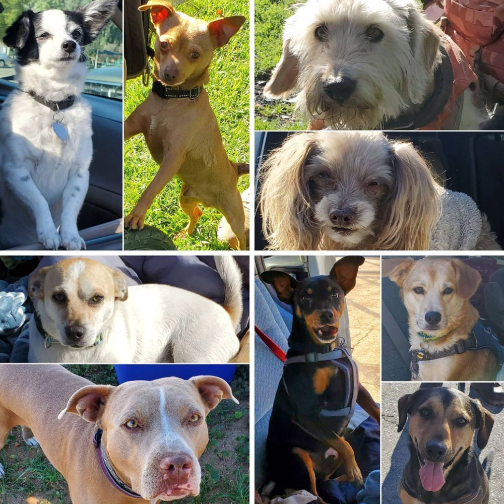 Friday's Furry Friends 3-5-2021