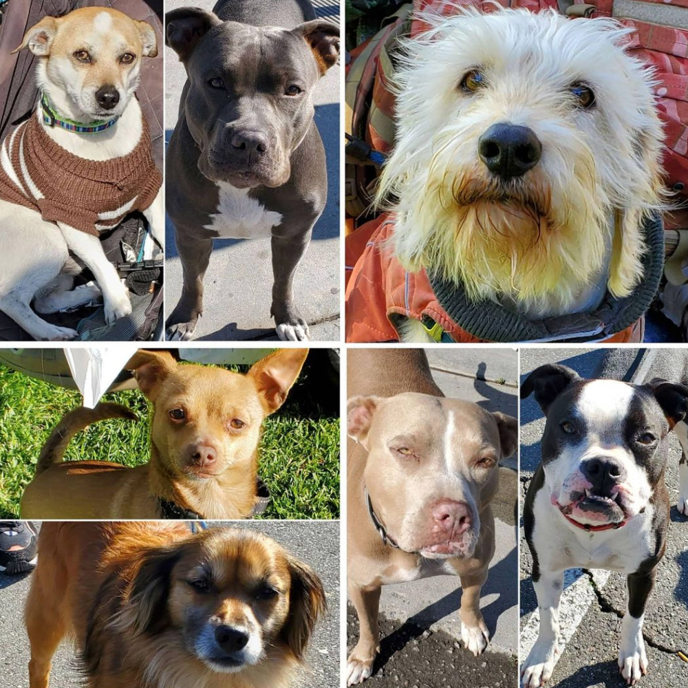 Friday's Furry Friends 3-12-2021