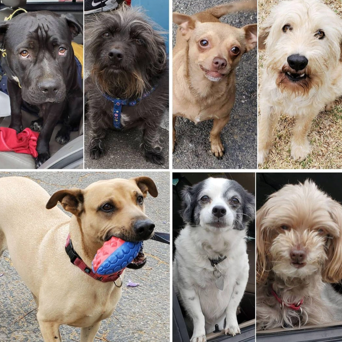 Friday's Furry Friends 5-14-2021