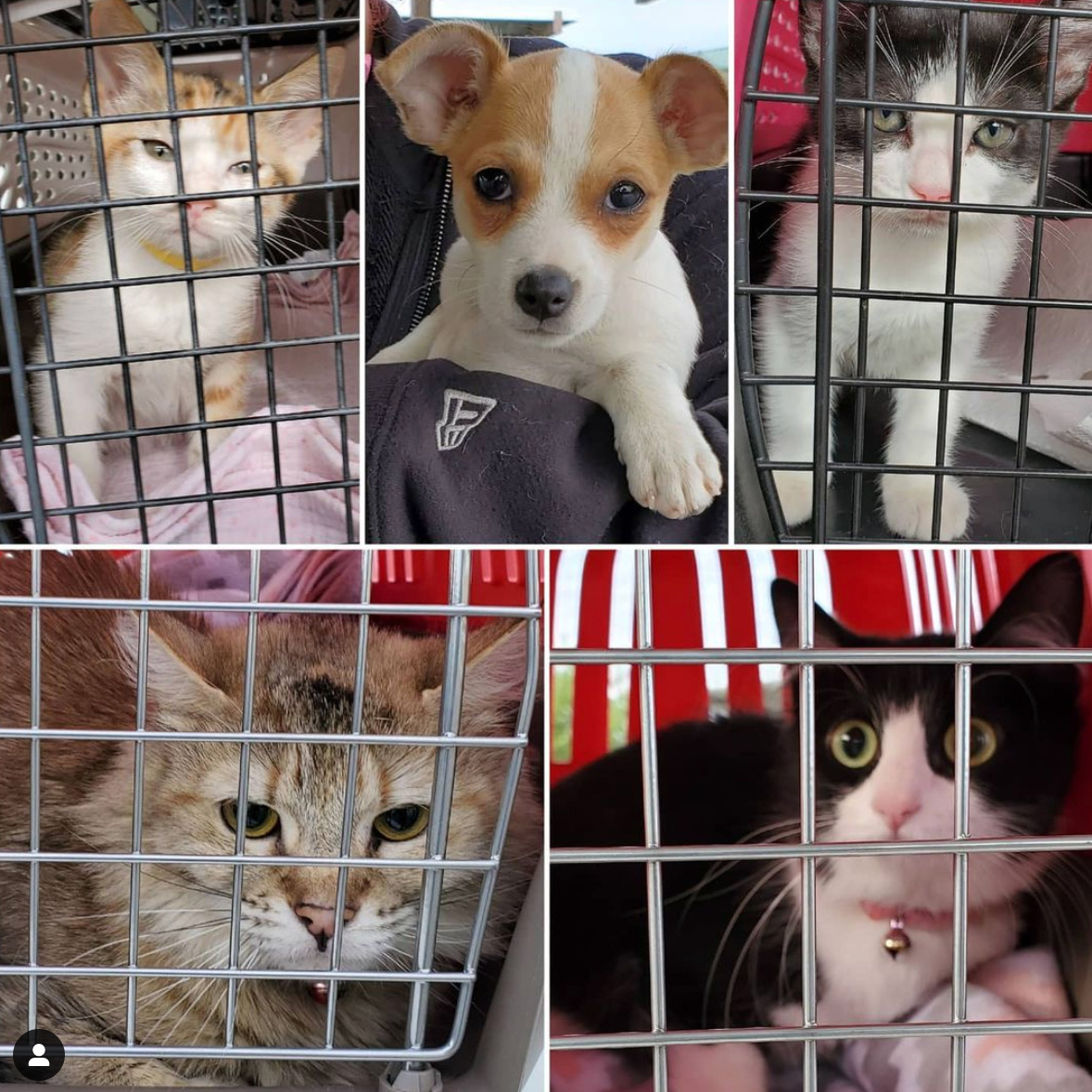 Spay/Neuter Day for #1447 to #1451 5-26-2021