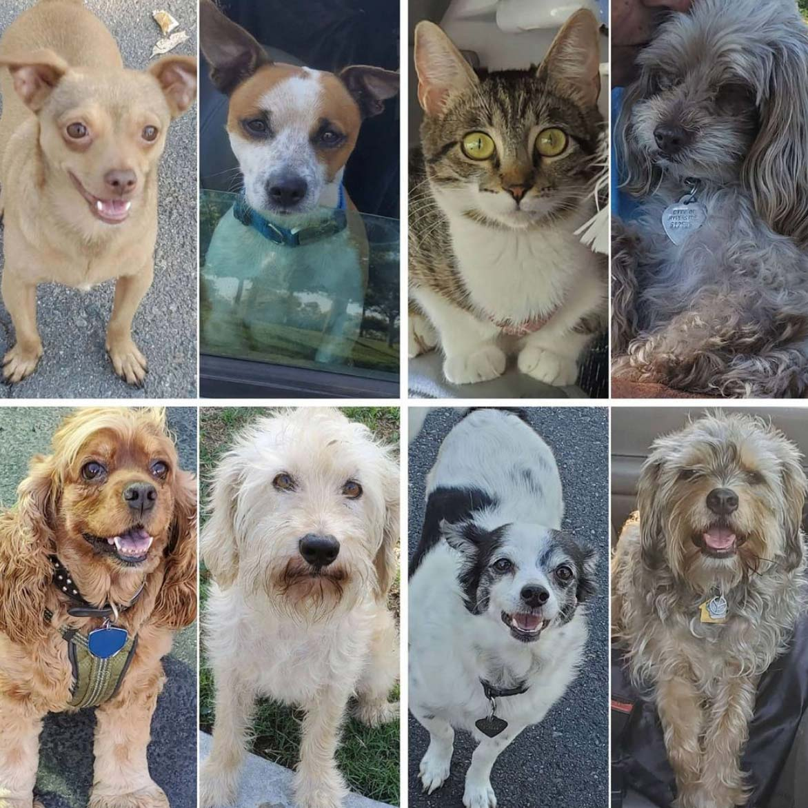 Friday's Furry Friends 7-2-2021