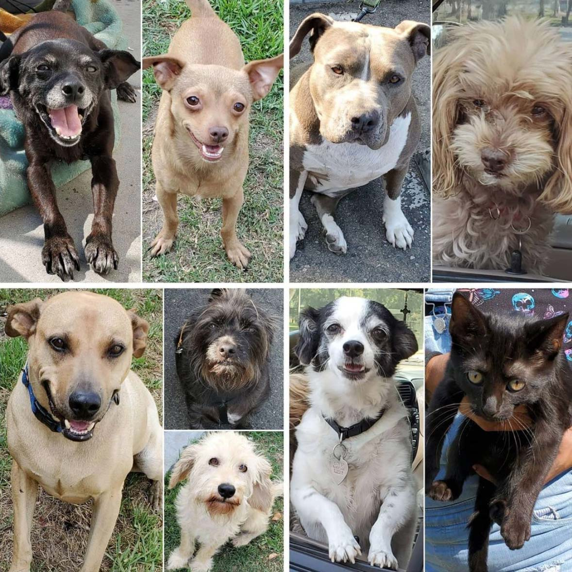 Friday's Furry Friends 7-16-2021