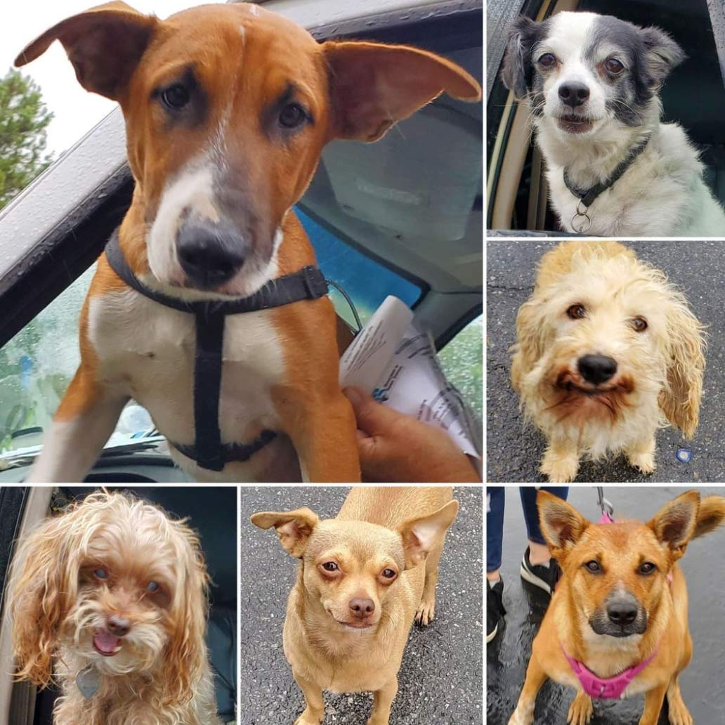 Friday's Furry Friends 10-8-2021